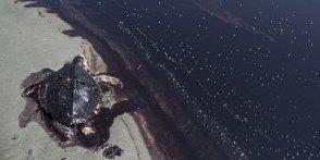 British Petroleum's Oil Spill